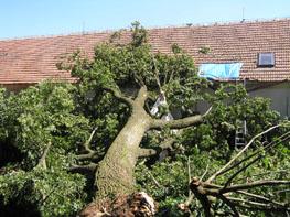 strom spadl na tee-pee